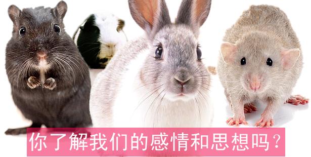 主要实验动物兔子老鼠和豚鼠和人血缘近似,智商高有爱心有道德,你了解他们的感情和思想吗?点击访问ARC中文动保小百科专题《主要实验动物的行为学》